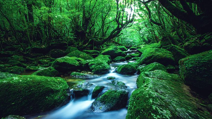 yakushima-kagoshima-natur-grün