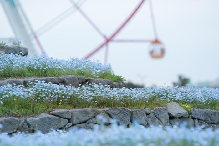 blumen am park in fukuoka