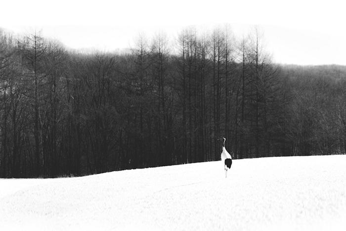 Kranich im Schnee