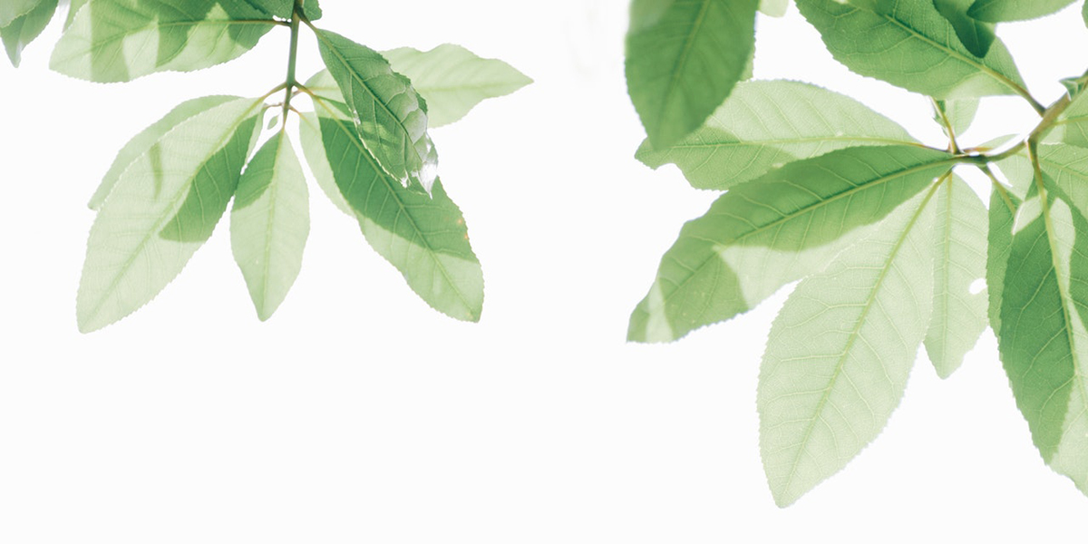 grüner teeblätter