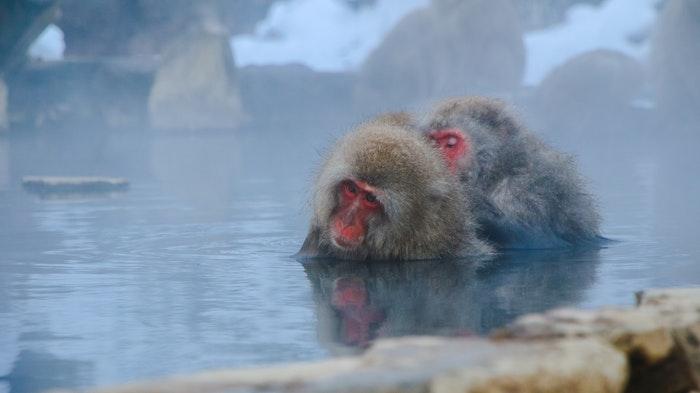 2 affen im onsen