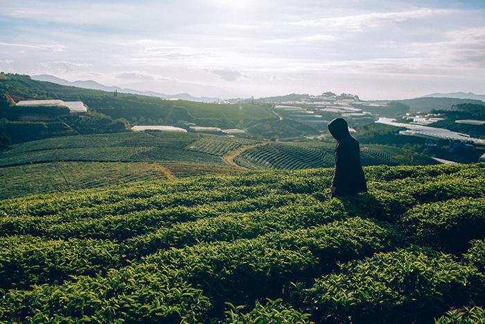 Teeplantage mit Mensch